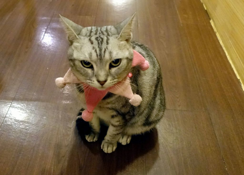 even this one, not happy with its collar :)
