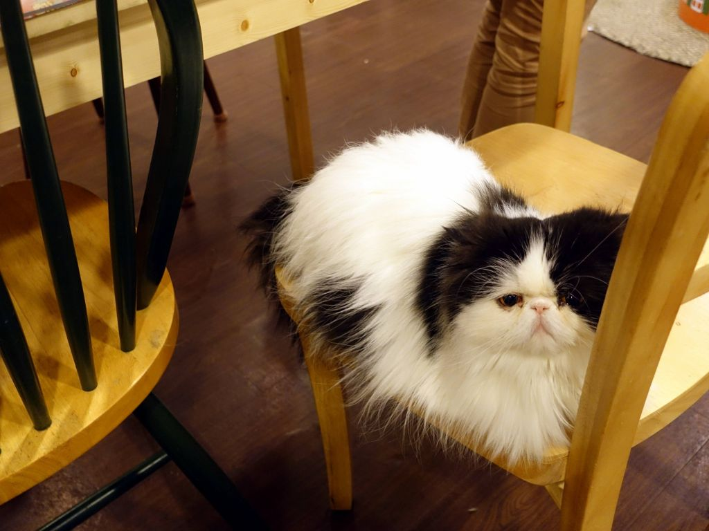 this one, still not looking happy, but that could be the breed