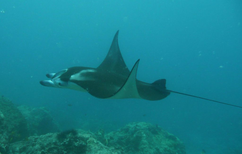one of the mantas from mantaville