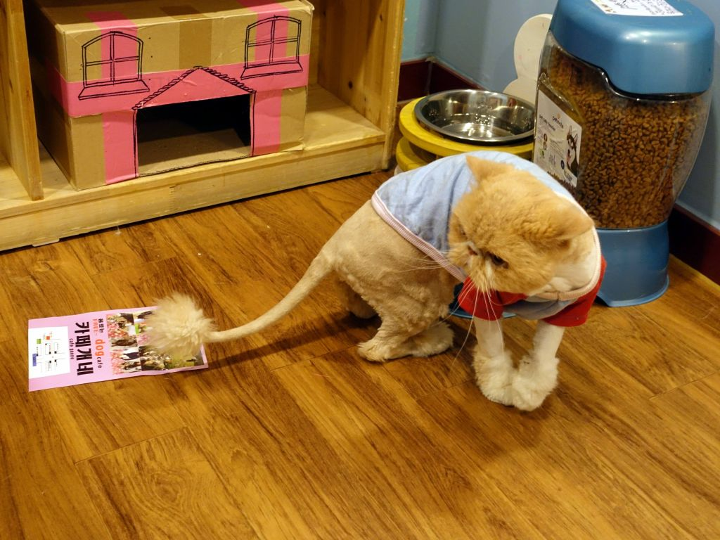 another unhappy lion chat