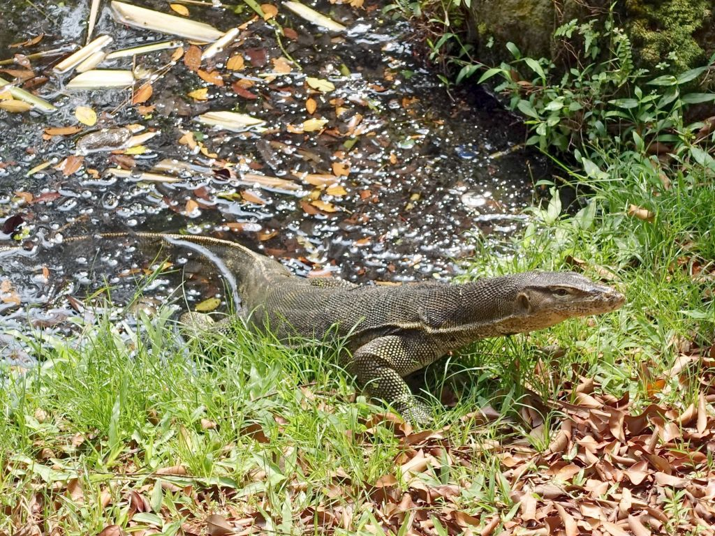 awesome, we got to find a water monitor