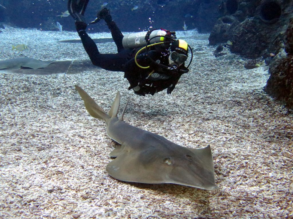 I love those ray sharks