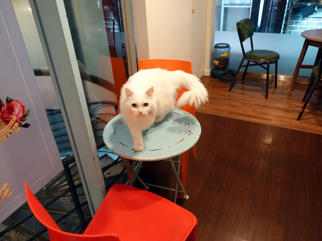 this cat was super nice, it came and licked me, and then climbed on my back. Quite rare for a cat café