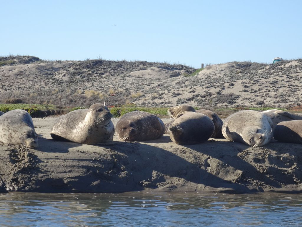 seals sunbathing