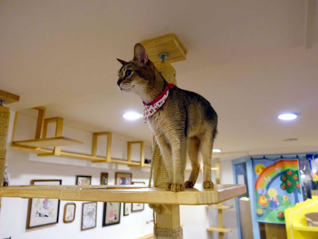 this one had a beautiful coat