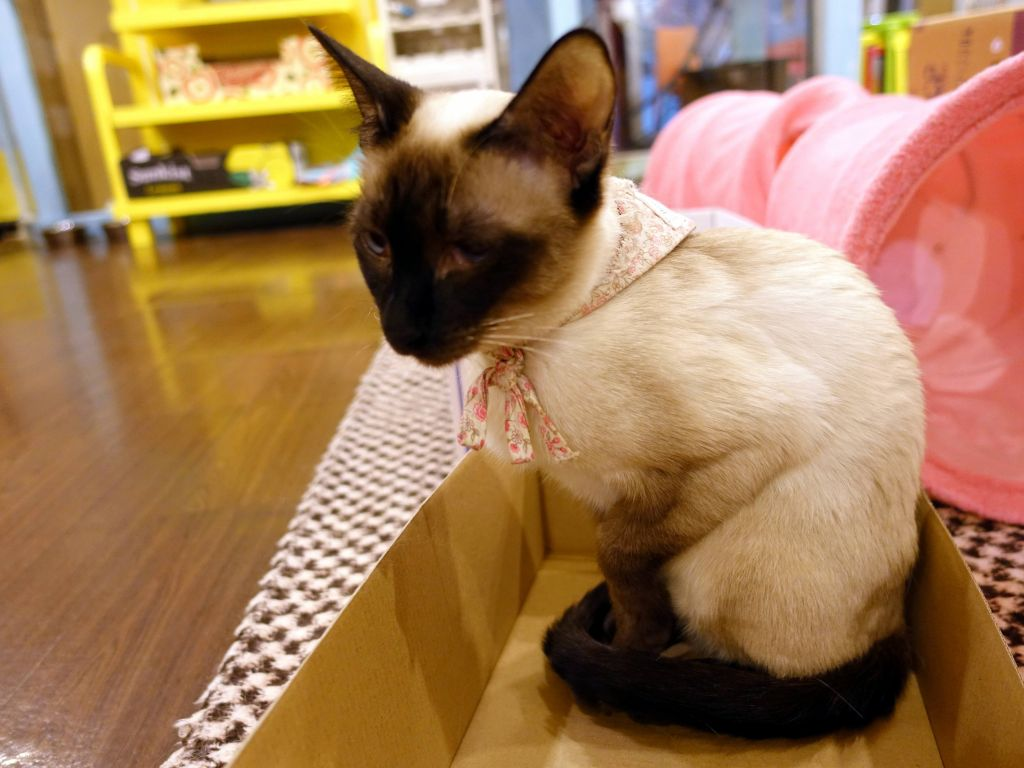this little kitty was beautiful and playful. I was even allowed to pick it up