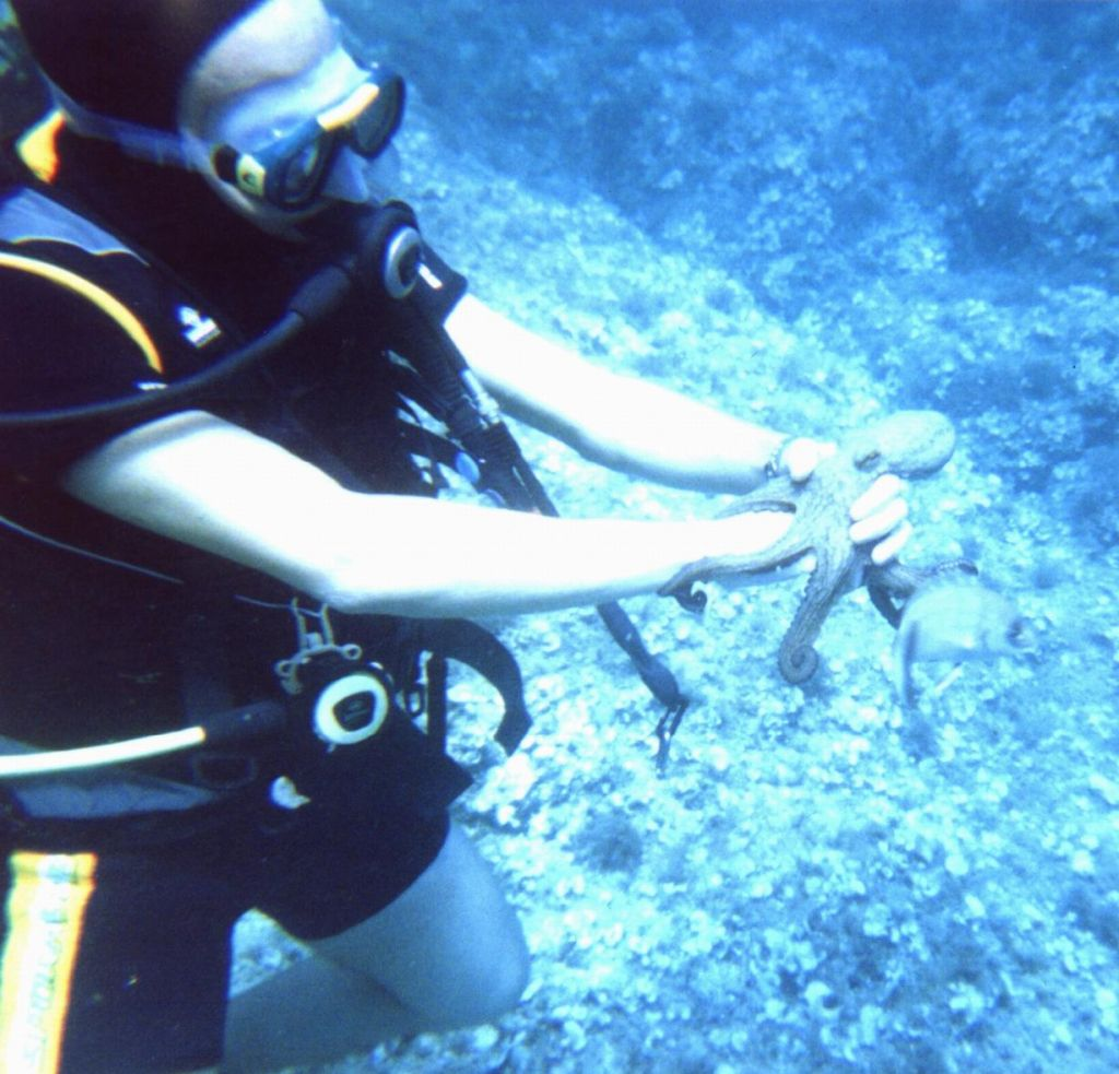 our divemaster breaking the dont mess with wildlife rule with a small octopus