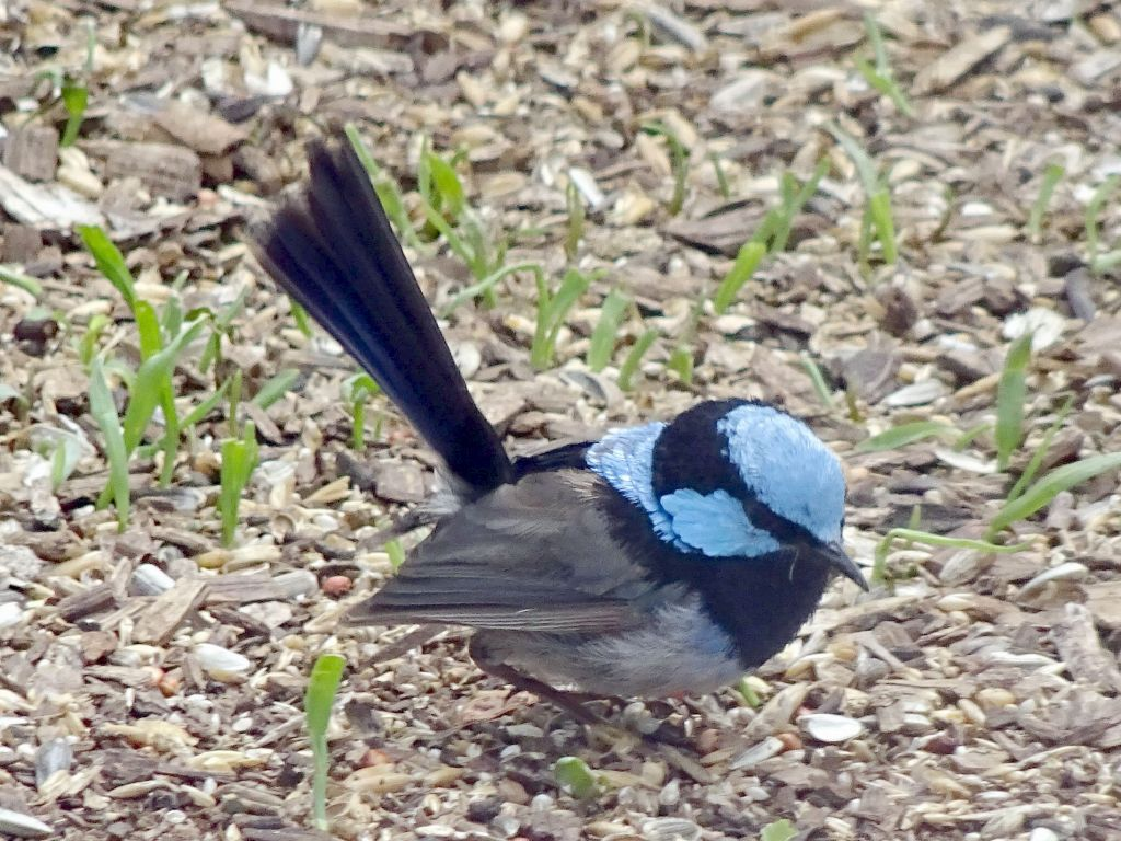 this bird is beautiful