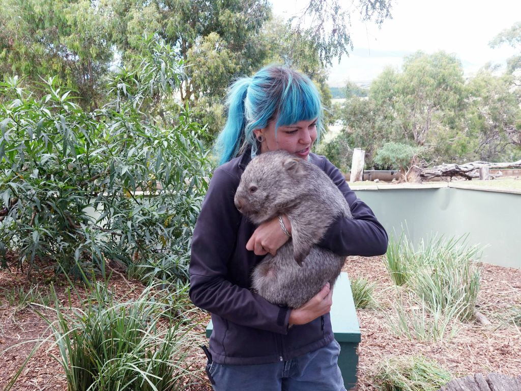 then, we got a baby wombat (they are cudly when they are small, but not when they grow up)