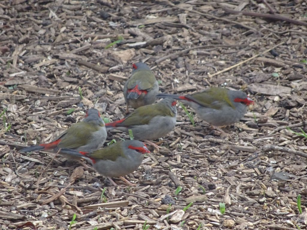 happy colorful birds