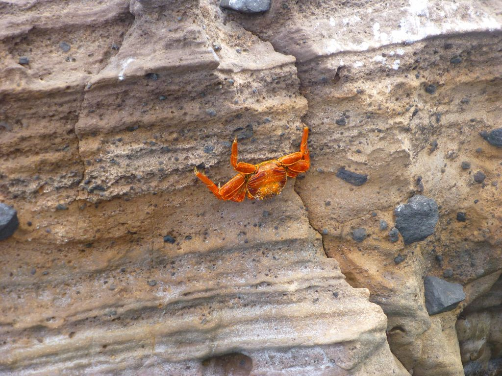 that crab climbed up and was hanging on a negative slope (half upside down)