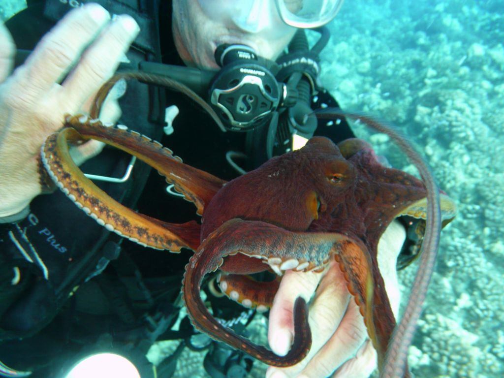 Octopuses are fun to play with