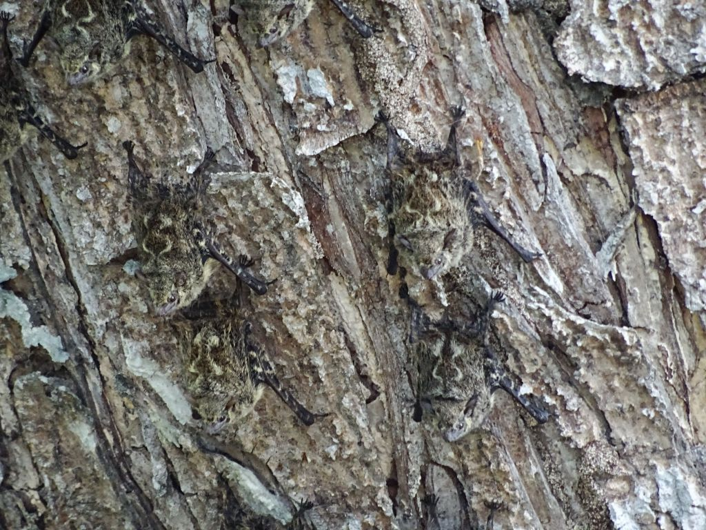 those bats were awesome, almost impossible to distinguish from the bark