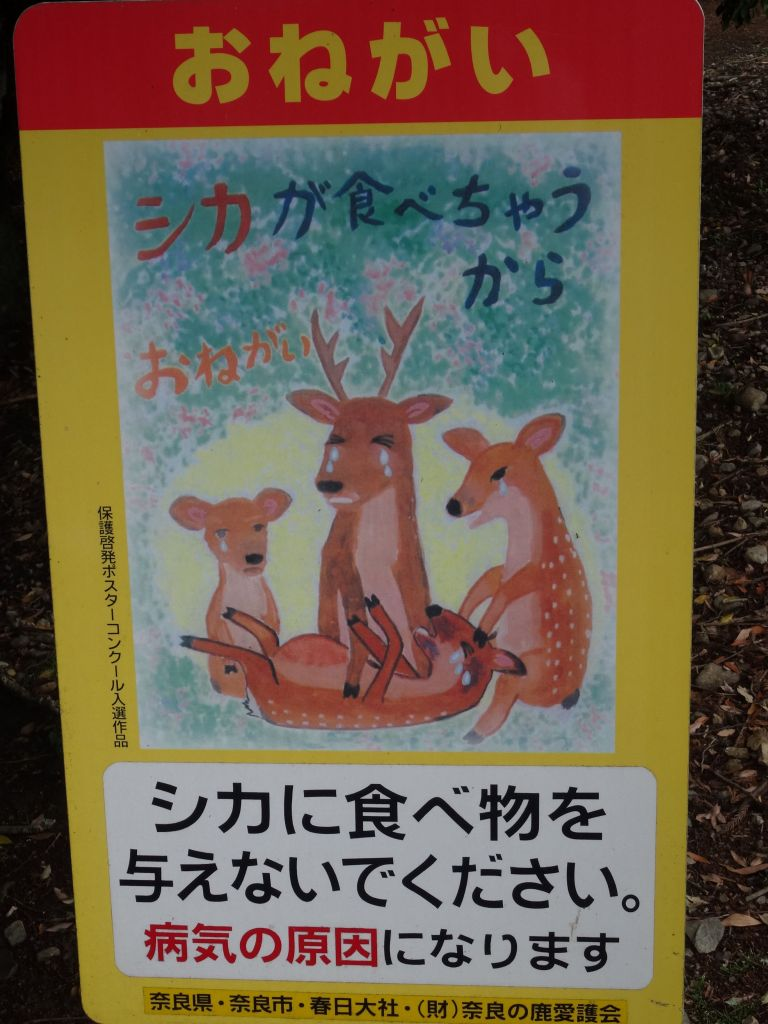 Do not feed the deer, or they'll be very sad :)