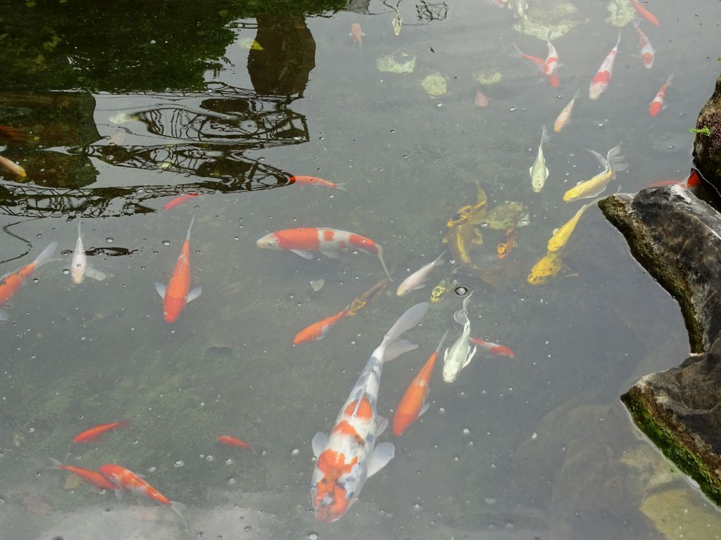 Asia seems to like their koi fish :)