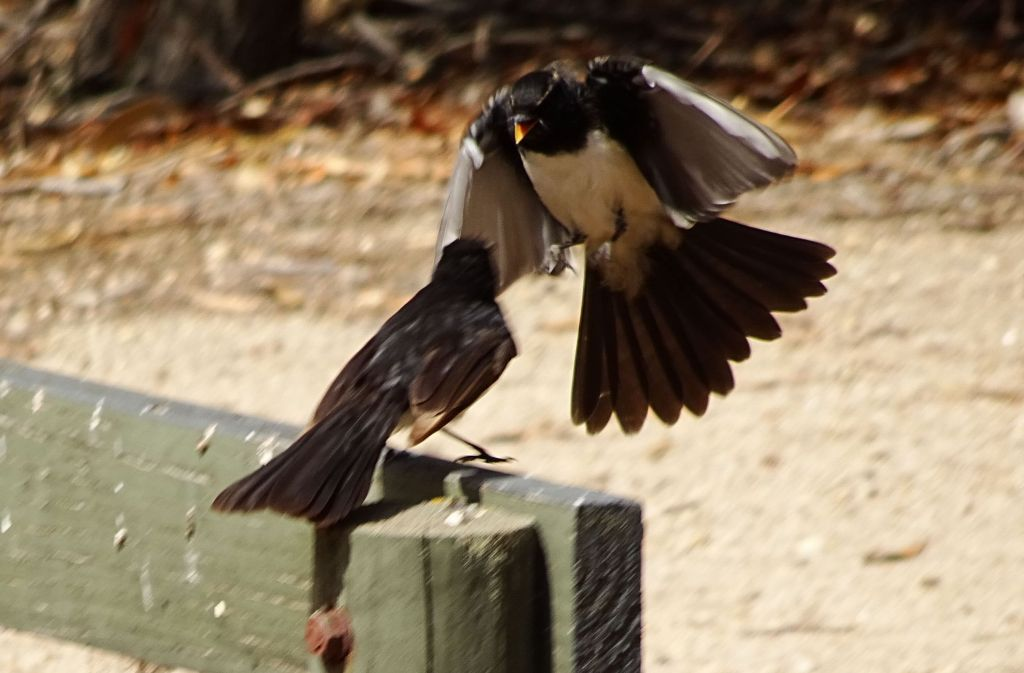 birds, goofing off