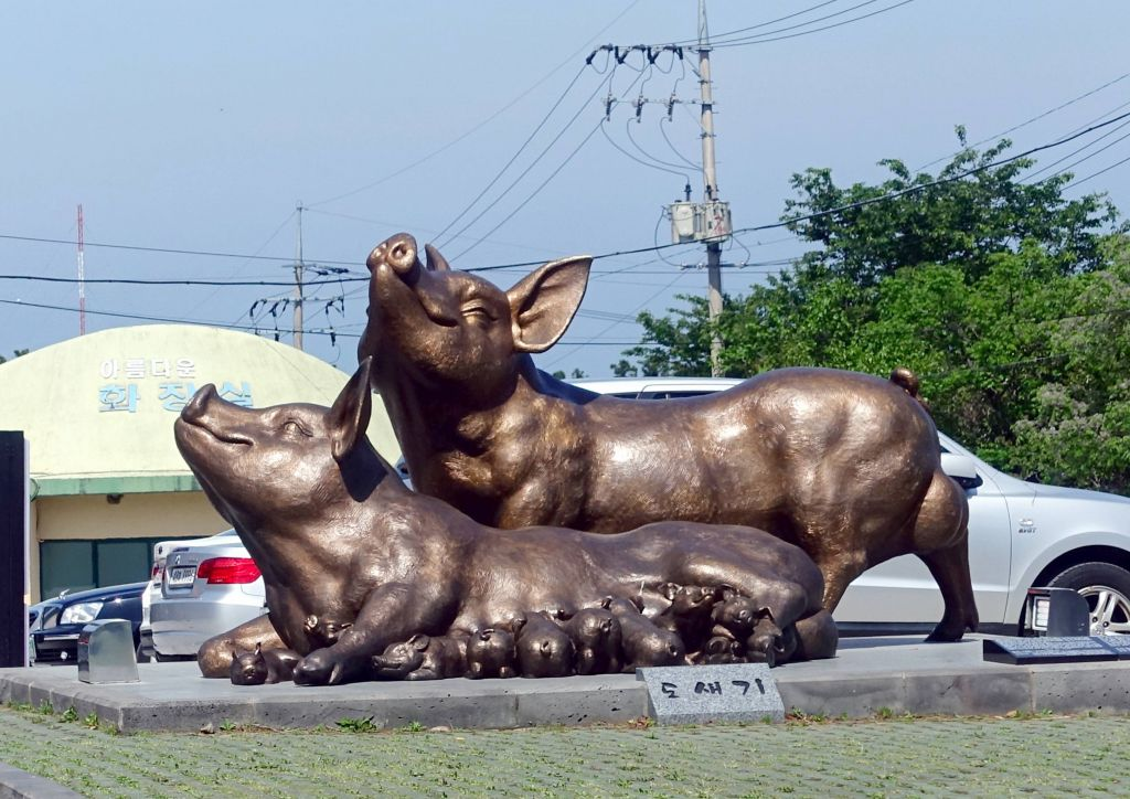 Jeju is known for black pigs