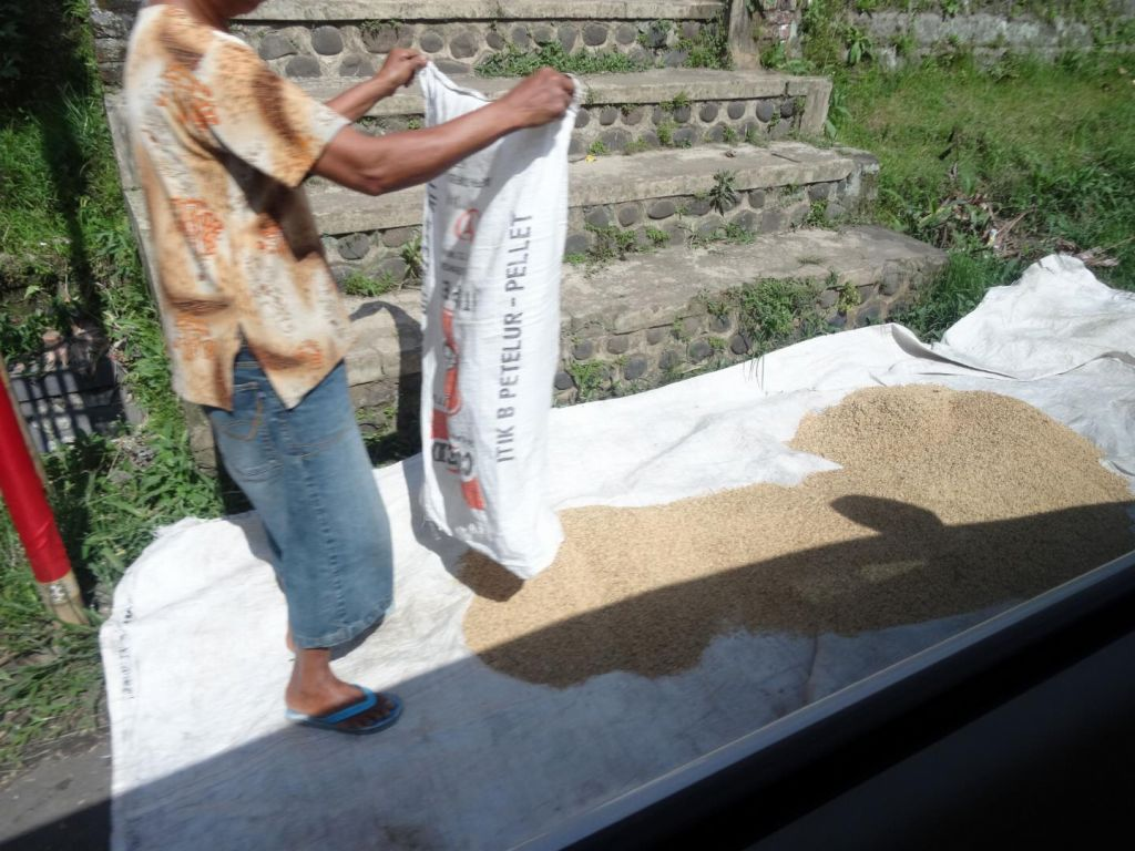 people drying their rice on the side of the road...