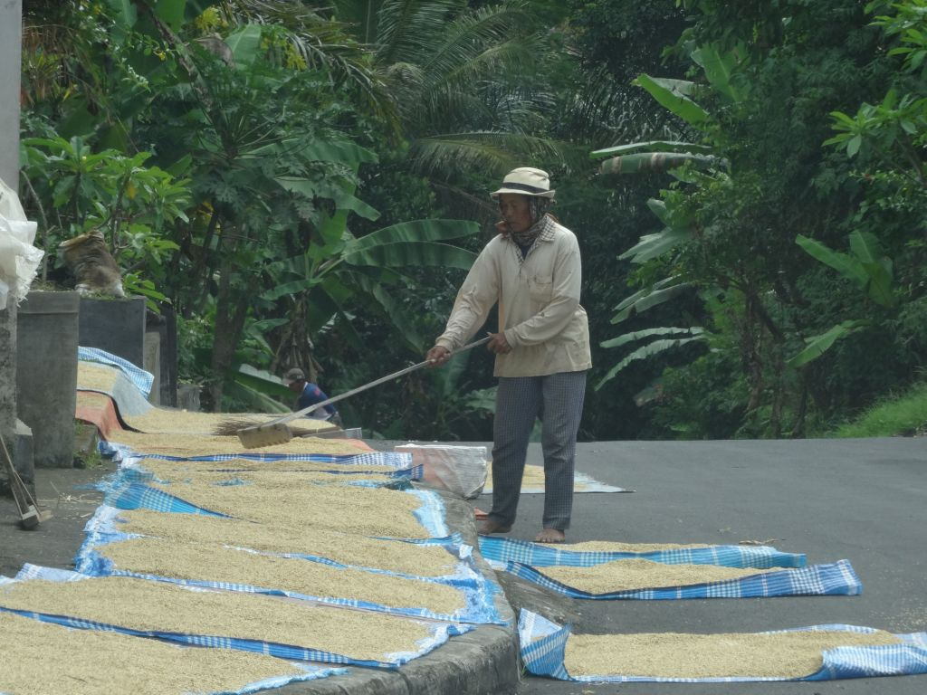 Some road were pretty narrow and still had rice drying on them