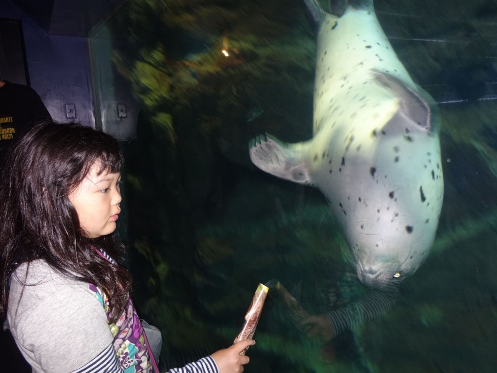 the seals were playful and would look at you and interact through the glass