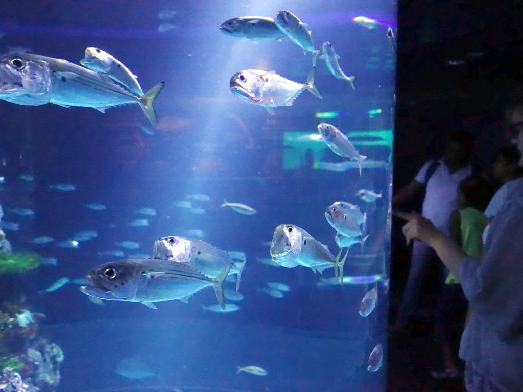 marc s aquariums singapore sea aquarium