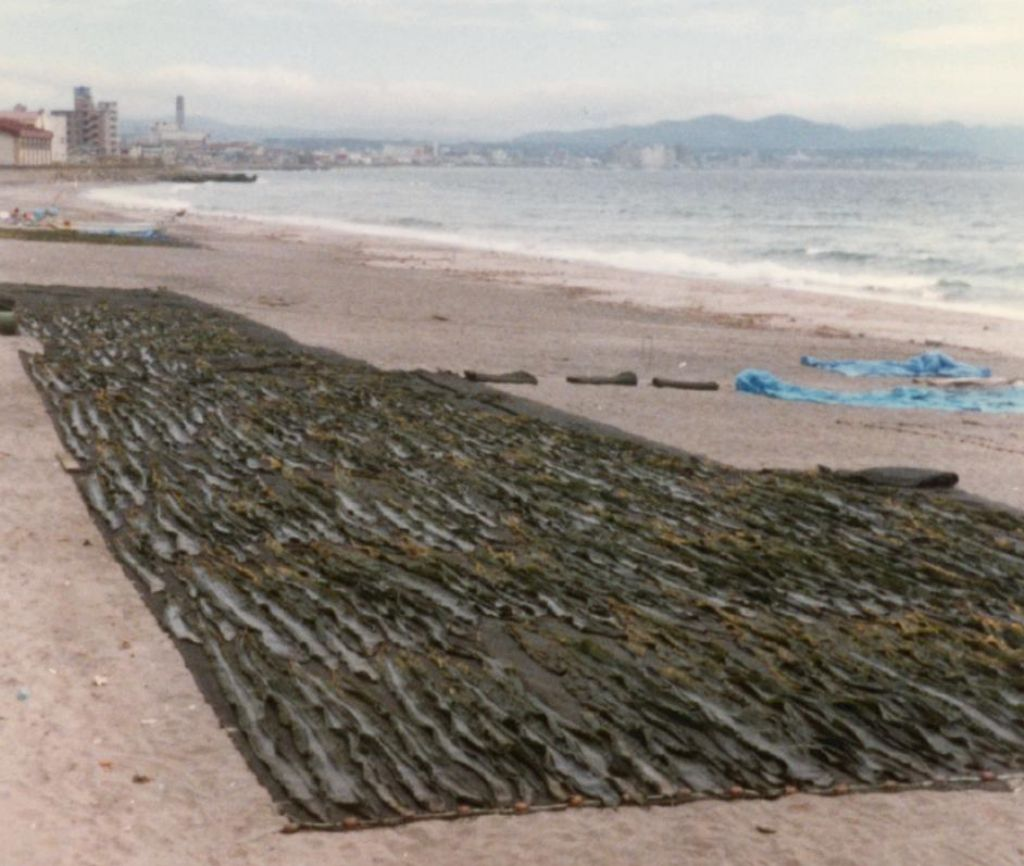 the beach was used to dry out nori (japanese seaweed)