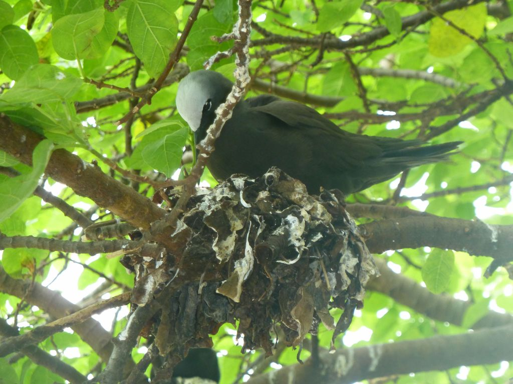 those sea birds evolved to trees and make crappy nests out of dry leaves and poo, their efforts were cute :)