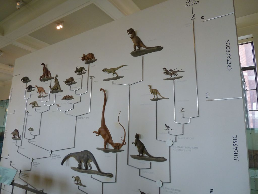 who knew that birds come from dinosaures?