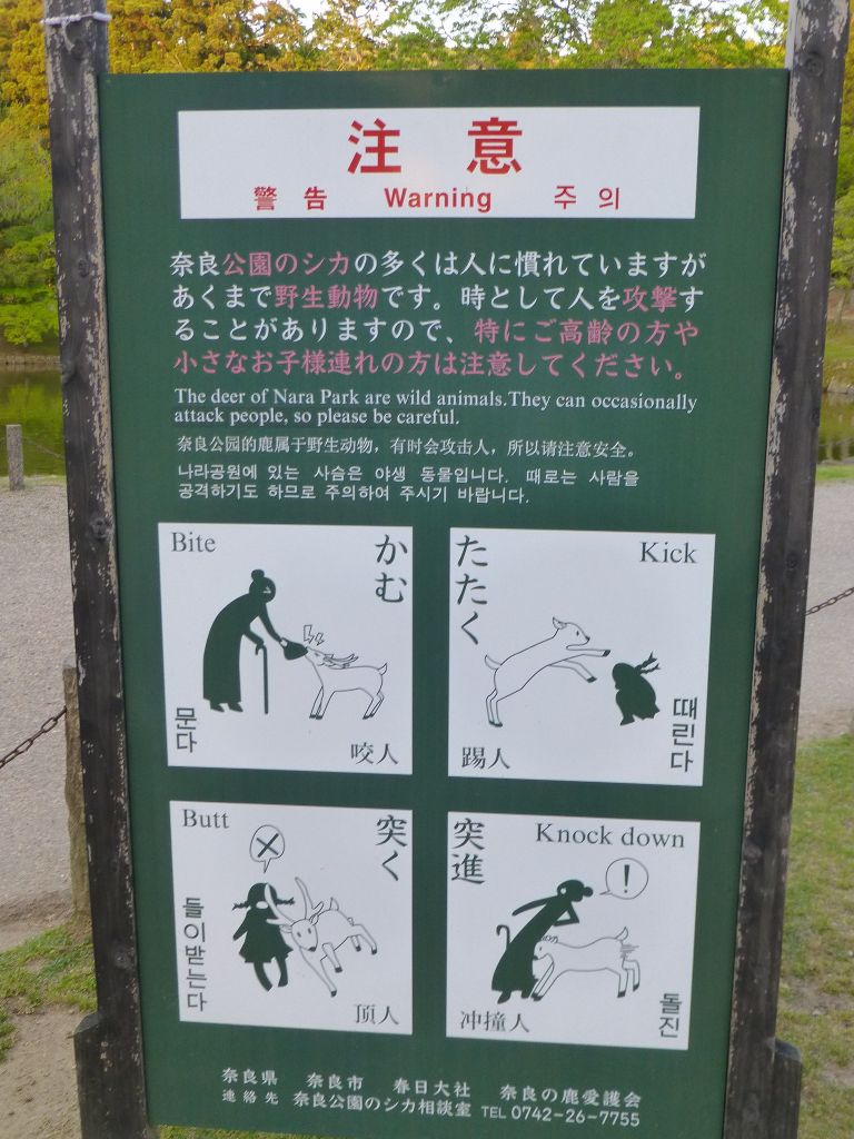don't mishandle the deer in Nara :)
