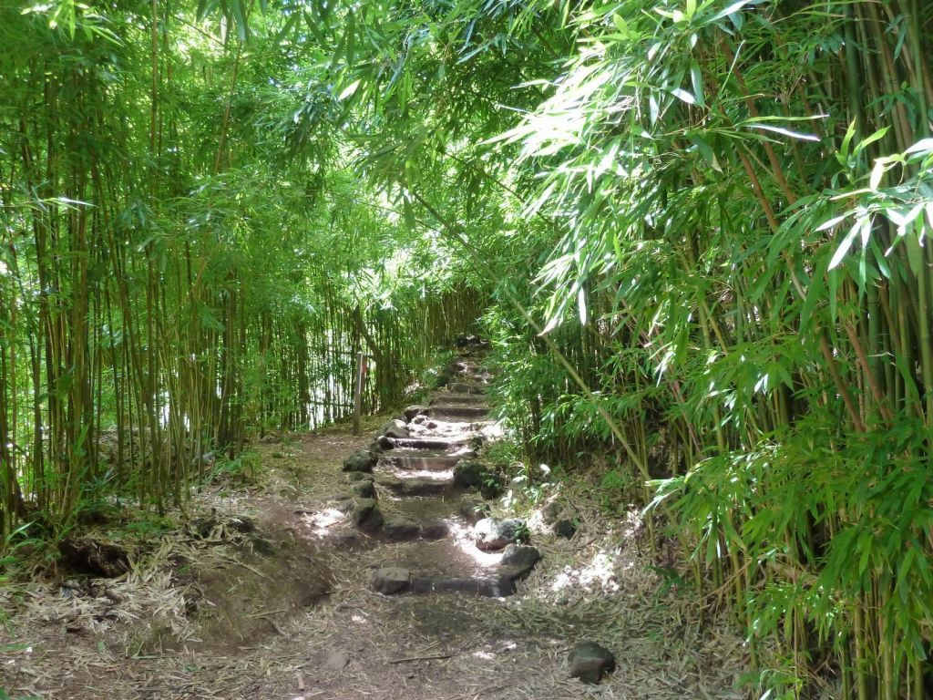 very nice bamboo forest