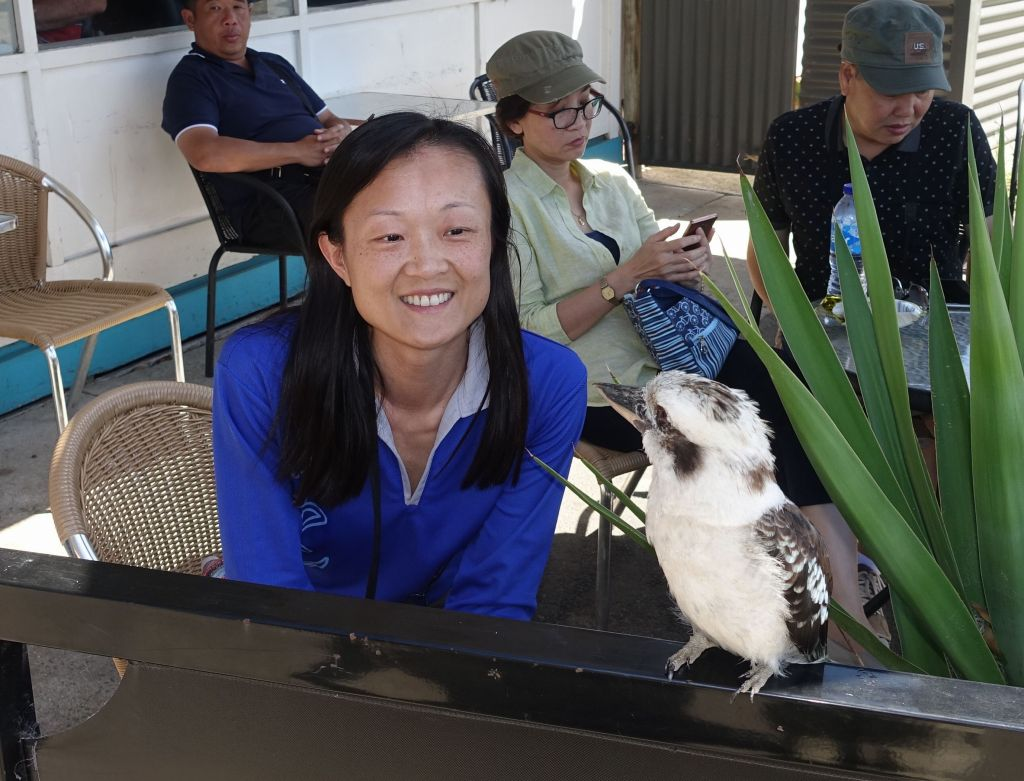 kookaburra are awesome birds too