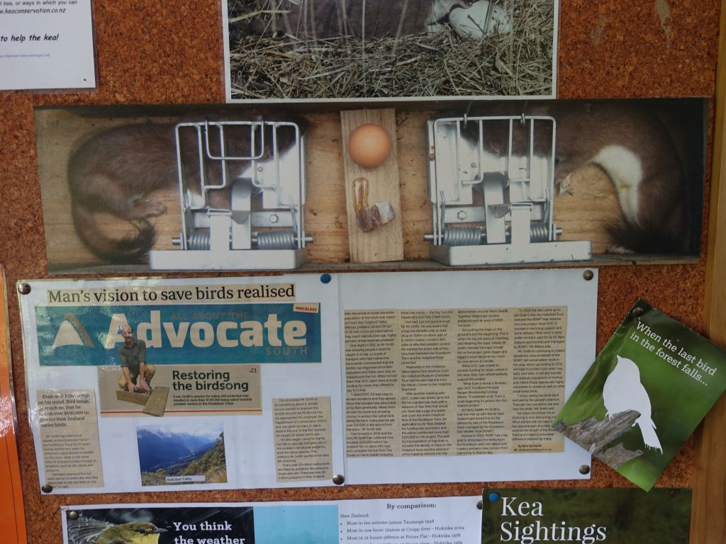 it explained how they are trying to kill the mammals have been decimating the local birds