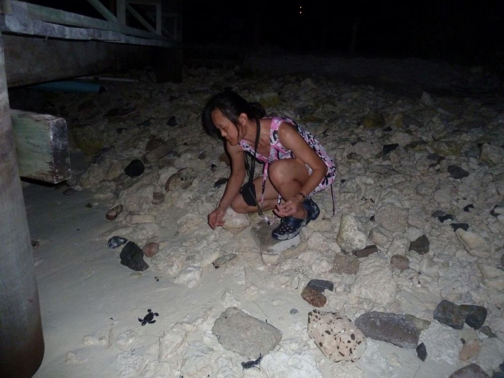 hand rescuing turtles from the jetty lights