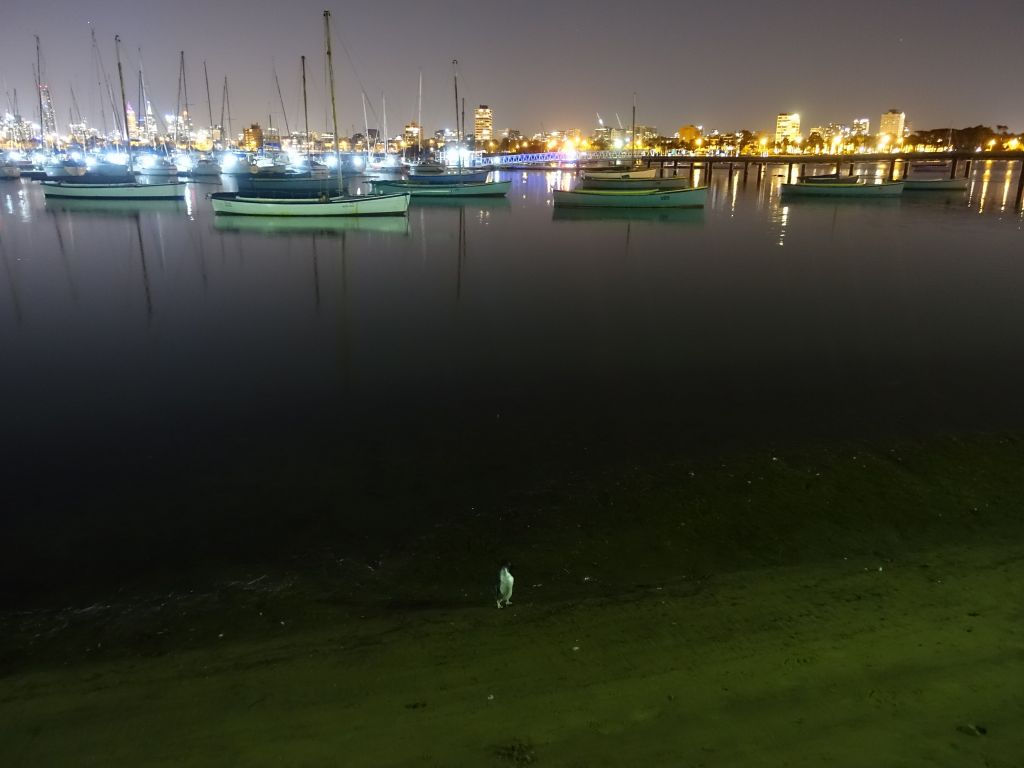 one penguin coming out of the water