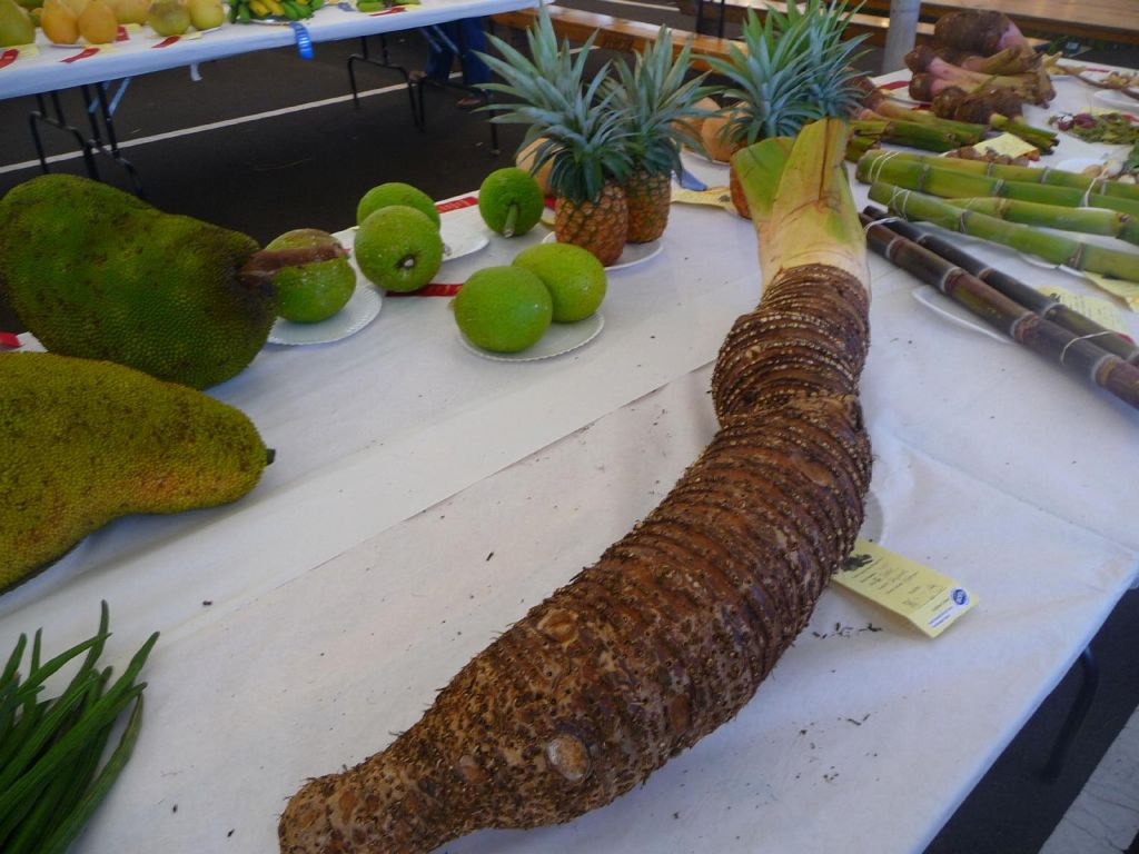 fruit and vegetable contest