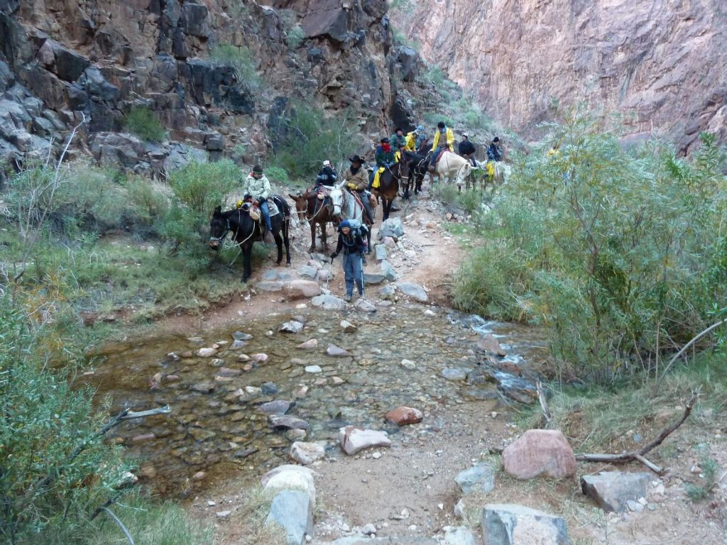 we trailled and passed the mules a couple of times