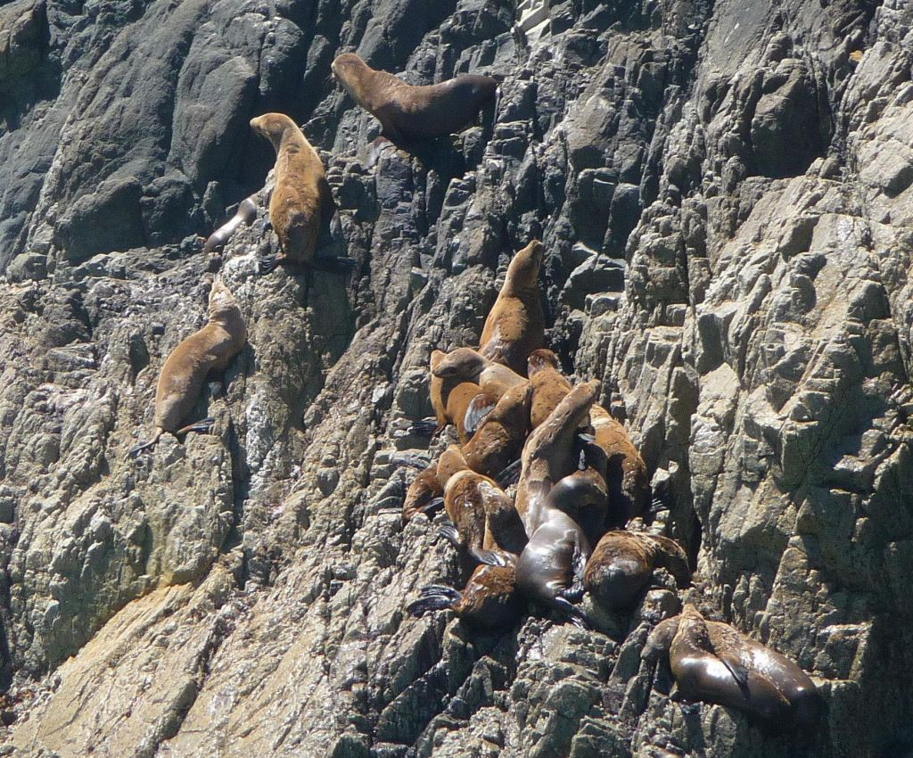those sea lions were really good at climbing rock
