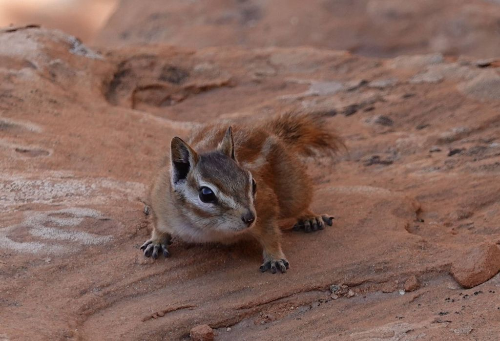 chipmunks were everywhere, this one wanted our lunch