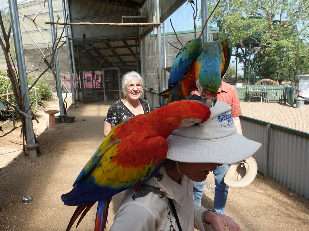 after terrorising the other lady, the 2nd macaw came to help to steal the ring, which they did
