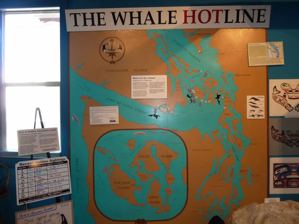 recent whale sightings