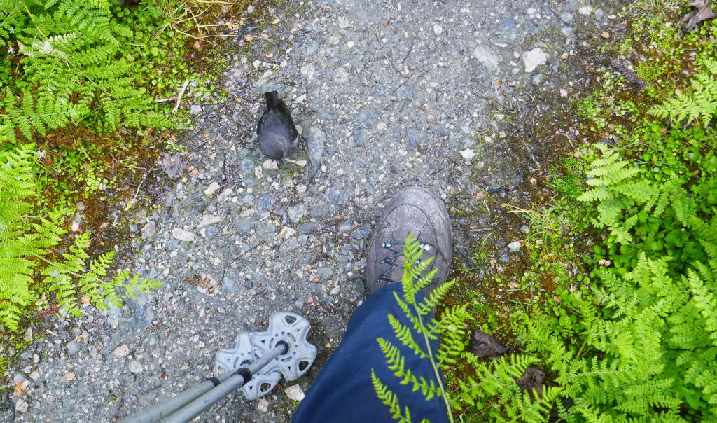 robins came back to check out my feet