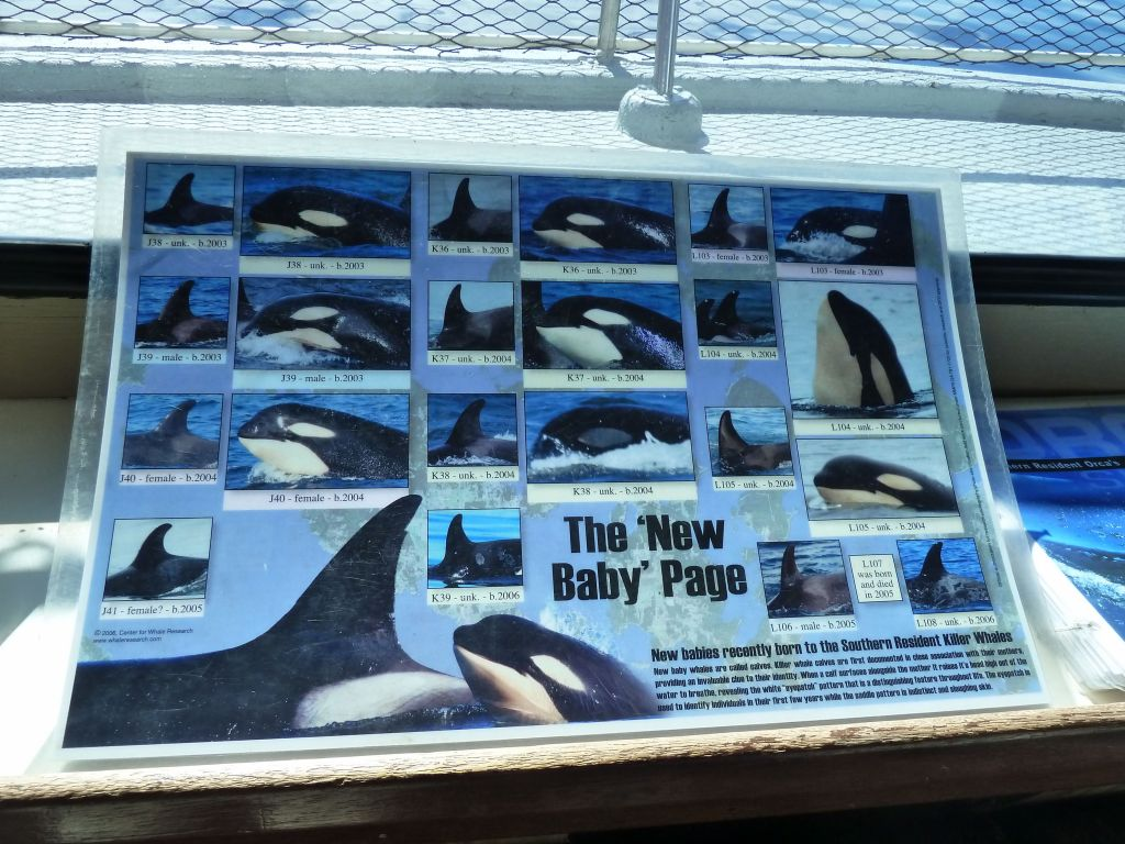 they have a catalog of local orcas