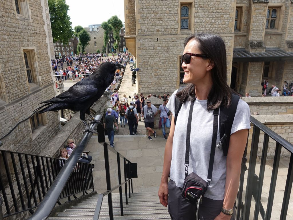 the tower of london had a few pet ravens