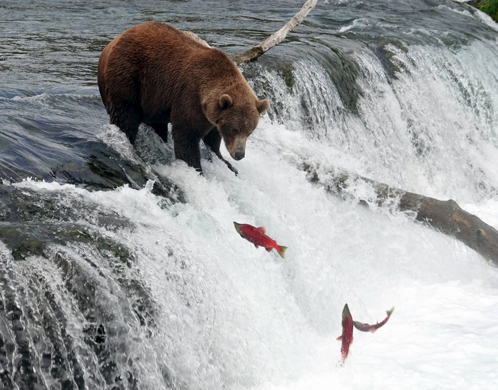 it was the end of that salmon run but from time to time we still saw a few trying to climb
