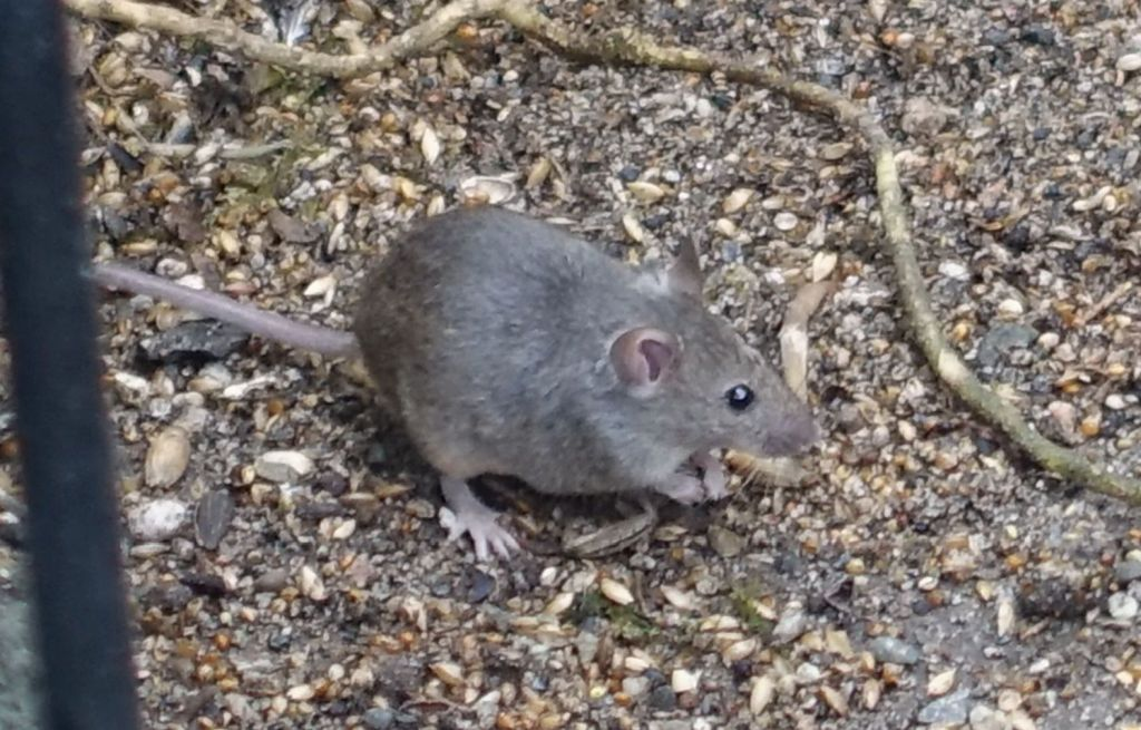 small mice were also there to enjoy the food :)