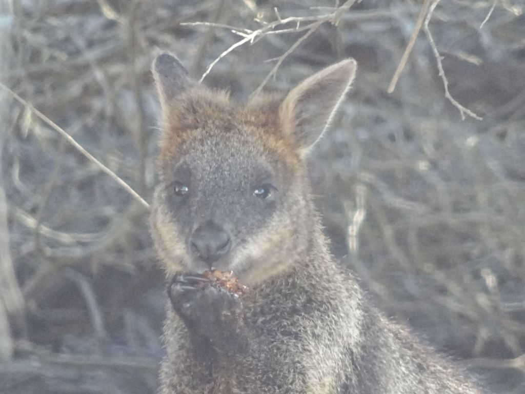 happily eating something :)