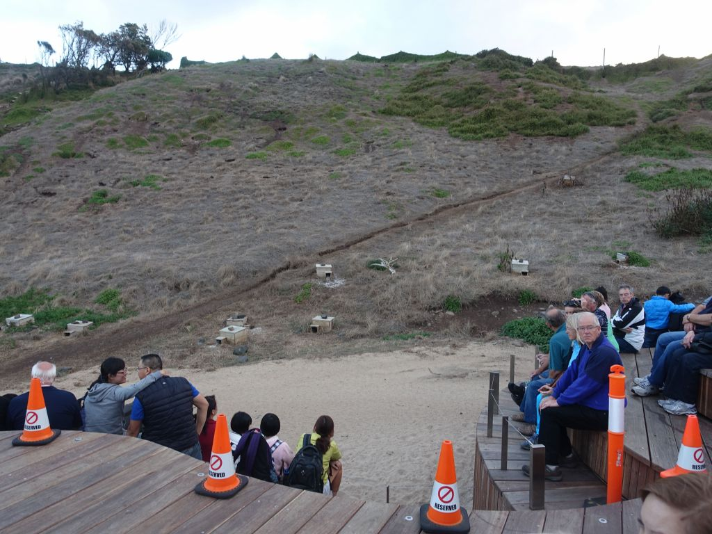 the penguins come from the ocean and walk up this path