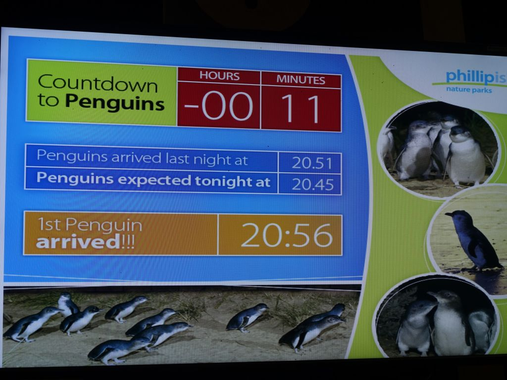 they had a penguin arrival counter :)