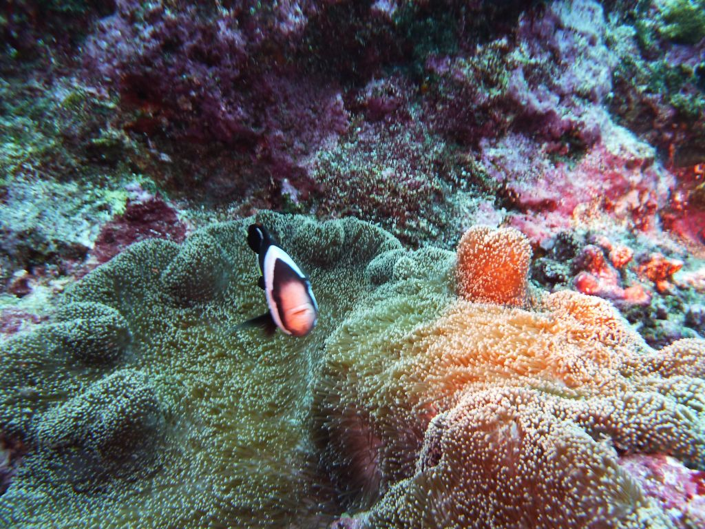 clown fish can be mean :)