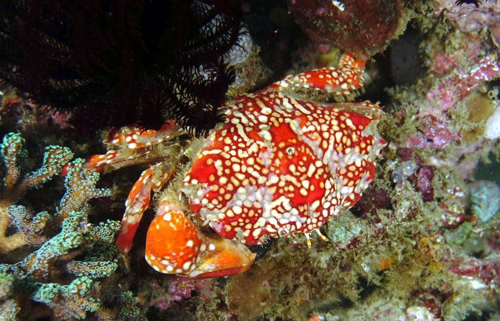 nice colorful crab
